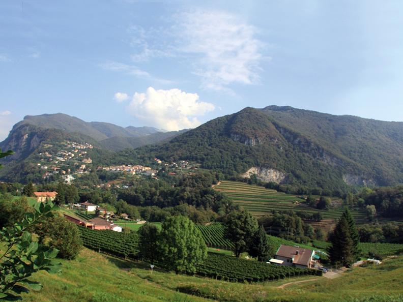 Image 0 - Azienda agricola e vitivinicola Cadenazzi