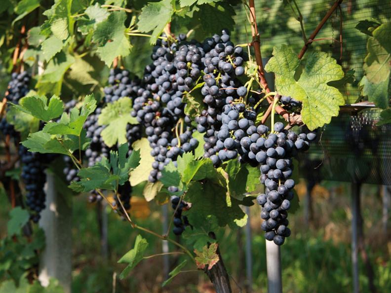 Image 1 - Azienda agricola e vitivinicola Cadenazzi