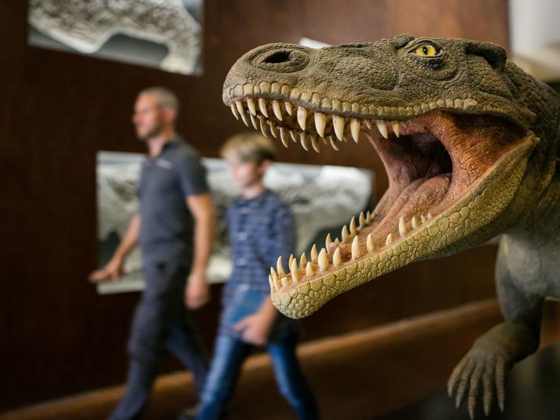 Image 0 - Museo dei Fossili - programma Autunno/Inverno 2019