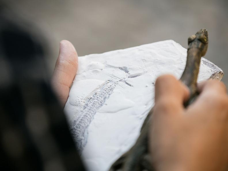 Image 1 - ANNULLATO: Giornata del Patrimonio Mondiale - Monte San Giorgio