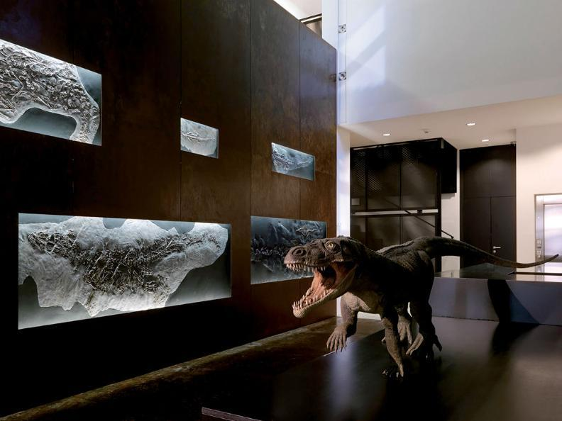 Image 3 - Museo dei Fossili - programma Autunno/Inverno 2019