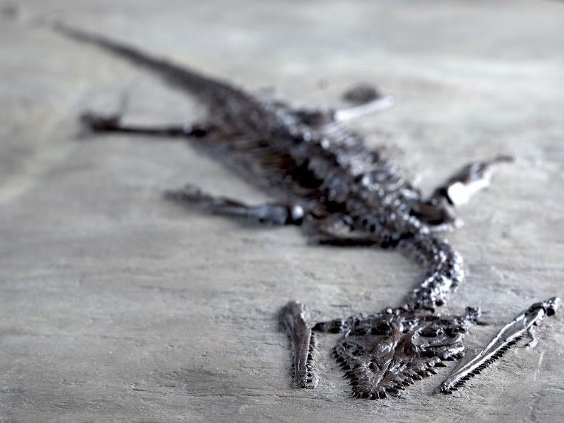 Image 4 - Museo dei Fossili - programma Autunno/Inverno 2019