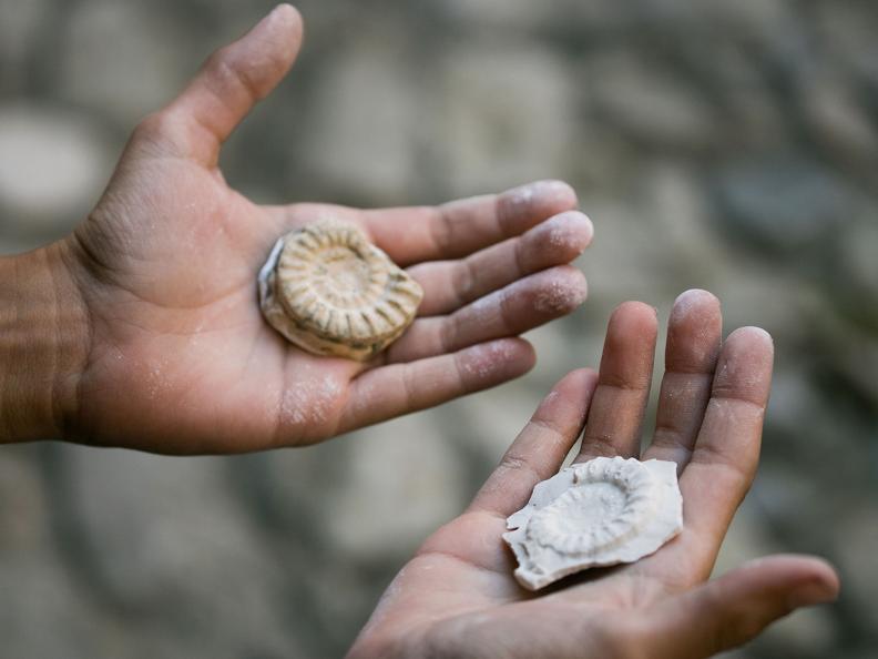 Image 2 - Corso di Mini-Paleontologo