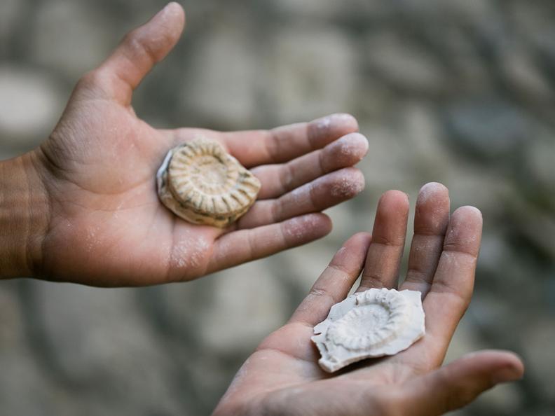 Image 1 - Crea il tuo fossile