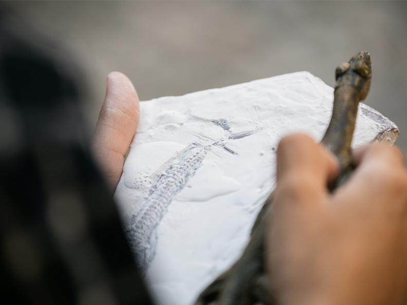 Image 2 - Crea il tuo fossile