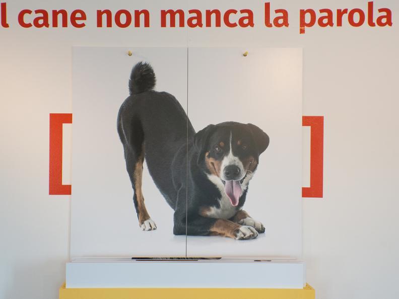 Image 0 - POSTICIPATO: Vita da cani! Tra necessità e assurdità