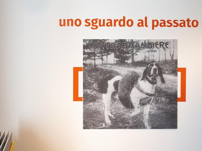 Image 6 - POSTICIPATO: Vita da cani! Tra necessità e assurdità