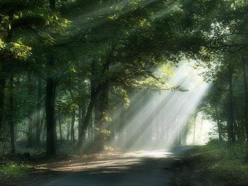 Image 0 - Il linguaggio segreto degli alberi