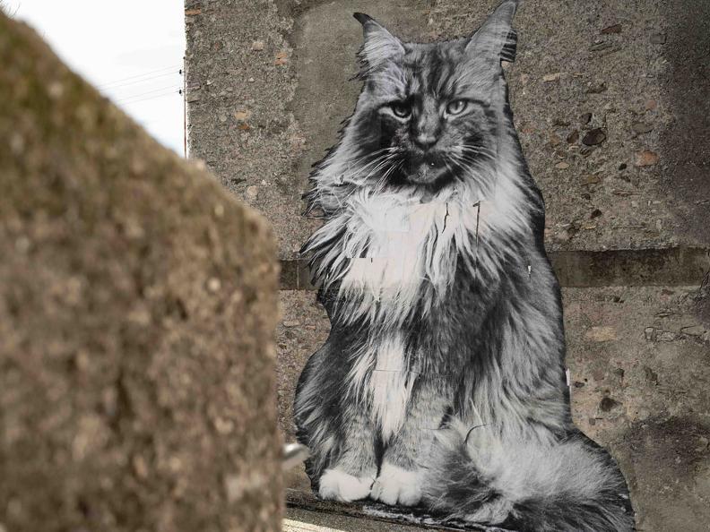 Image 1 - Die Katzen von Rovio