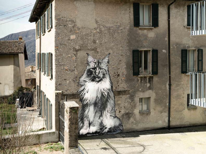 Image 2 - Die Katzen von Rovio