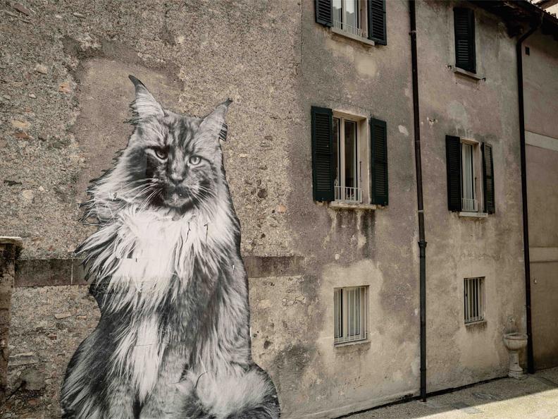 Image 0 - Die Katzen von Rovio