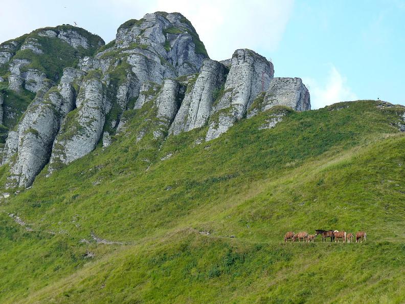 Image 0 - Les chevaux sauvages du Bisbino