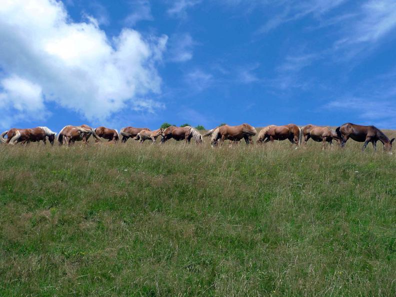 Image 1 - Les chevaux sauvages du Bisbino