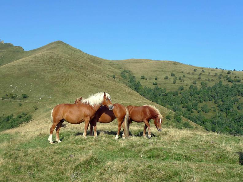 Image 2 - Les chevaux sauvages du Bisbino