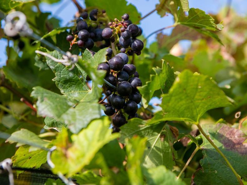 Image 4 - Wine Tasting in the cellar