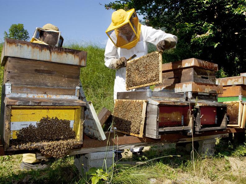 Image 0 - Besuch und Honigverkostung am Bienenstand
