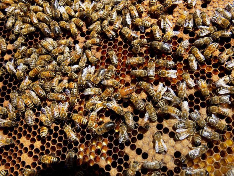 Image 2 - Besuch und Honigverkostung am Bienenstand