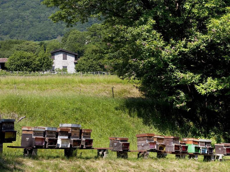 Image 3 - Besuch und Honigverkostung am Bienenstand
