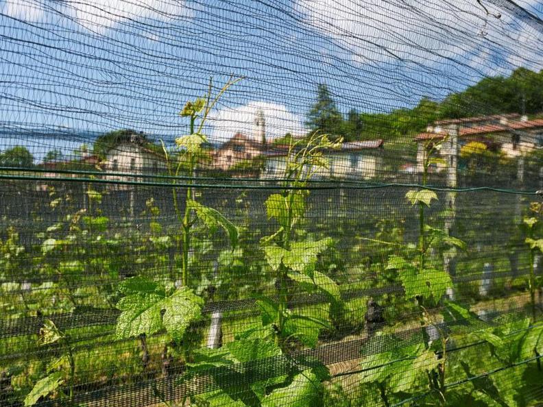 Image 2 - Fumagalli SA