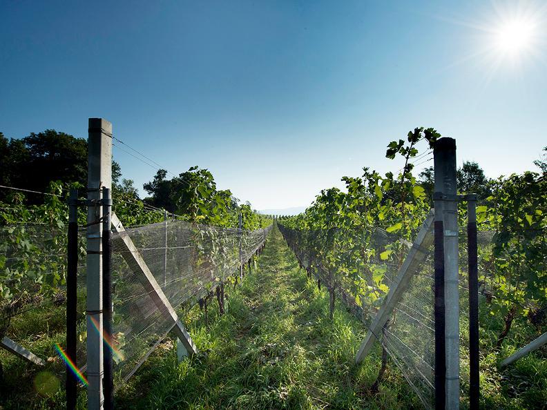 Image 2 - Tenuta vitivinicola Ferrari Roberto e Andrea