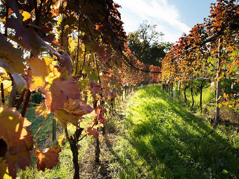 Image 0 - Tenuta vitivinicola Ferrari Roberto e Andrea