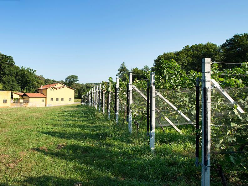 Image 1 - Tenuta vitivinicola Ferrari Roberto e Andrea