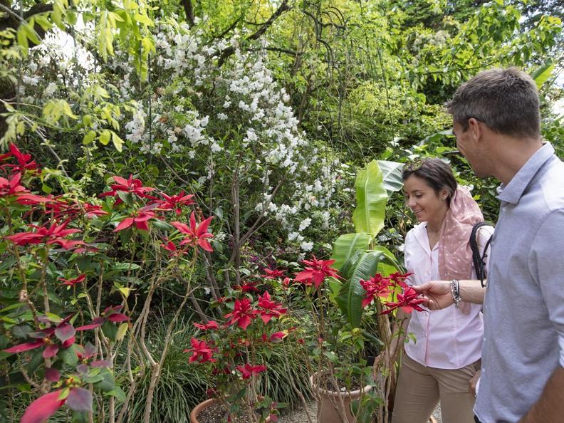 Image 4 - Isole di Brissago – Giardino Botanico