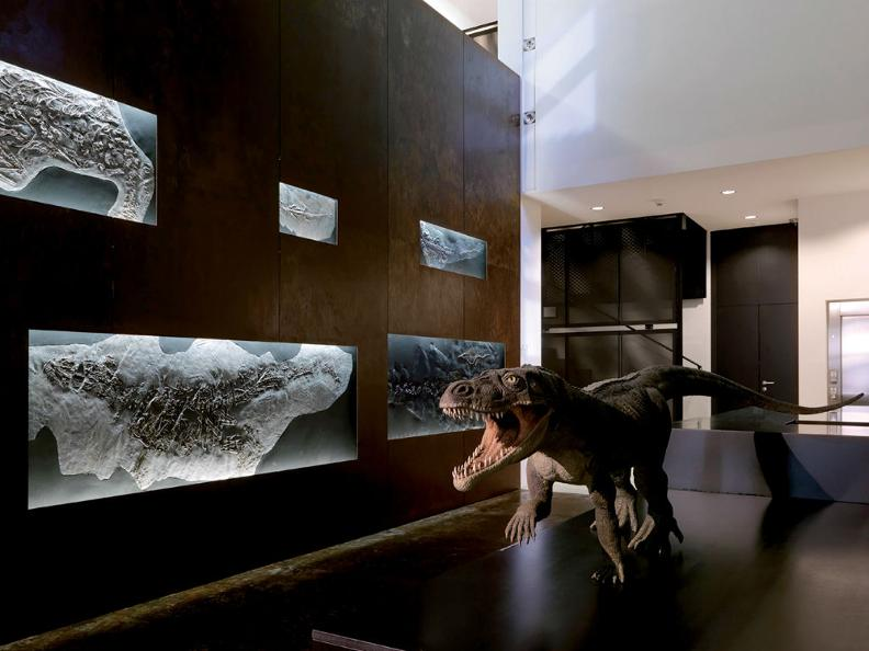 Image 2 - Fossil Museum of the Monte San Giorgio