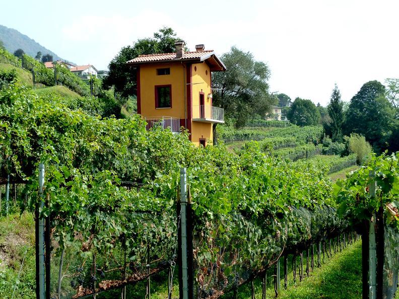 Image 0 - Cave vinicole Cavallini