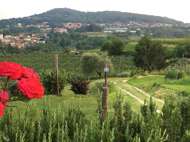 Image 1 - Tenuta Vitivinicola Trapletti SA