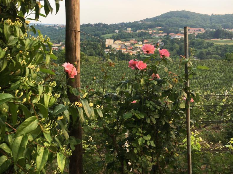 Image 2 - Tenuta Vitivinicola Trapletti SA