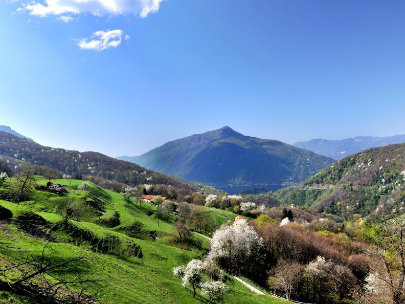 Image 4 - Monte San Giorgio, ein Meer voller Erinnerungen