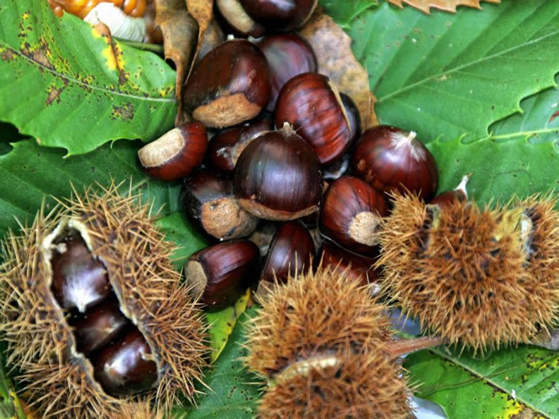 Image 1 - The chestnut