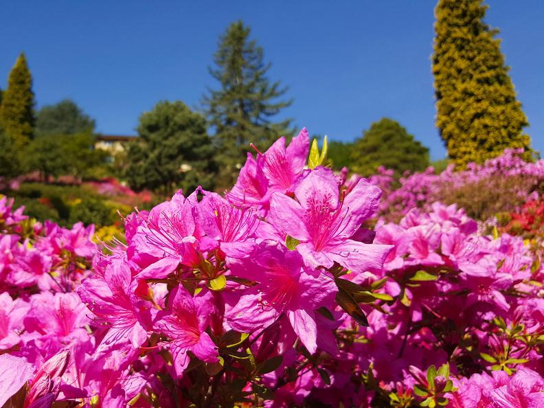 Image 3 - Parco San Grato - Carona