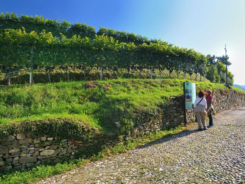Image 0 - Itineraries through vineyards