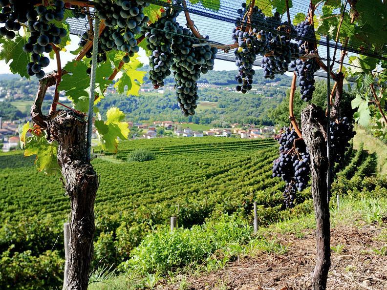 Image 1 - Itineraires à travers les vignobles