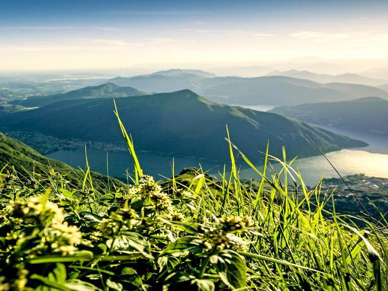 Image 3 - Entdecken Sie Monte San Giorgio mit Morsetta