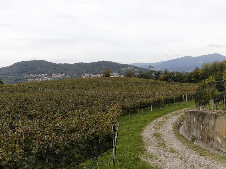 Image 5 - Itinerary among vineyards: the viticultural techniques