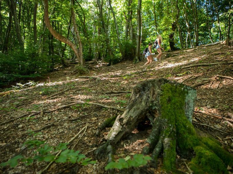Image 1 - Sentiero del Monte San Giorgio